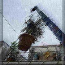 庭木(植栽管理)オリーブ空を飛ぶ!