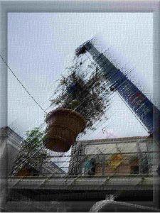 オリーブ空を飛ぶ! シンボルツリー 屋上緑化