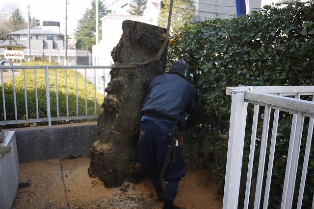 庭木伐採撤去作業