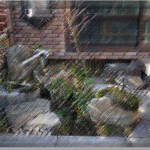 和風庭園(苔庭)