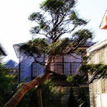 樹木再生、樹勢回復、ガーデニングリフォーム