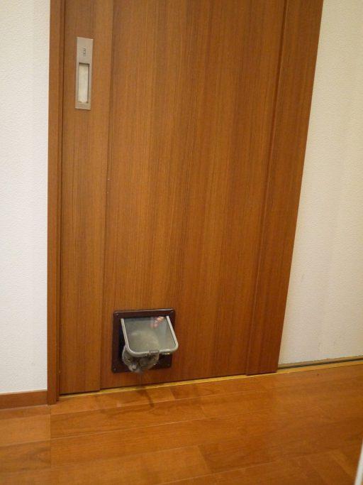 ONE DAYリフォーム(ガーデニングリフォーム)工事 PART1、ペット専用ドア、エーイーシー